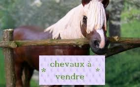 voila un tr s joli cheval qui est a vendre les schleich customis. Black Bedroom Furniture Sets. Home Design Ideas