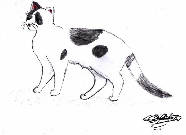 Chat tacheté noir et blanc