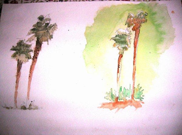 Les palmiers du jardin public
