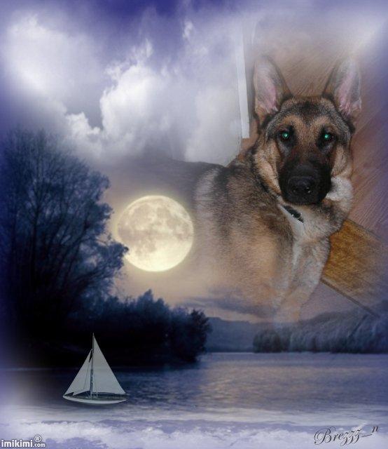 mon chien polo est aller rejoindre mes parents et ma soeur j'espere qu'ils prendron soin de lui