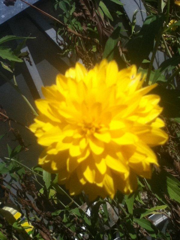 Yellow Flower*