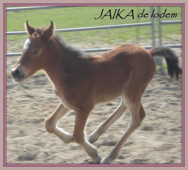 Miss Jaika De Lodem