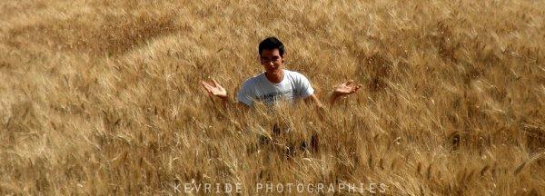 Perdu dans un champs de......tournesol?