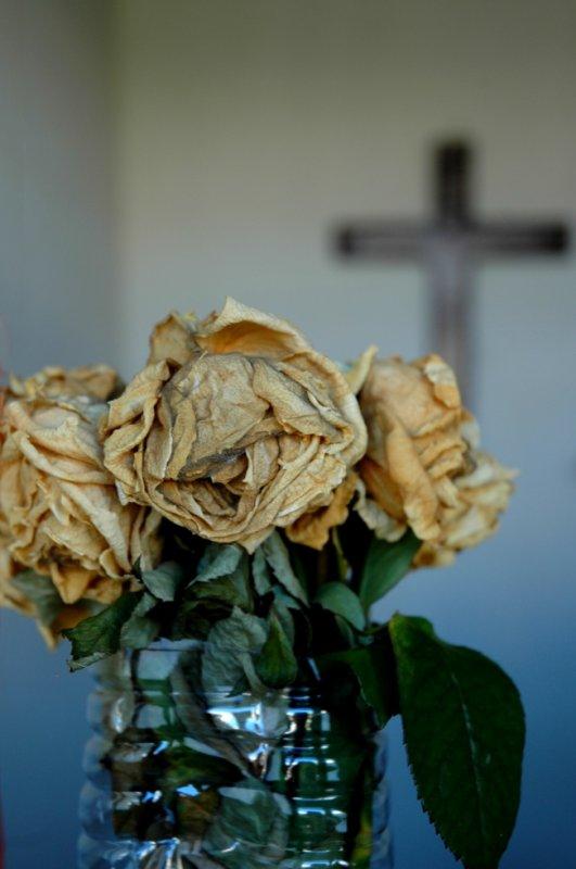 fleurs fannees