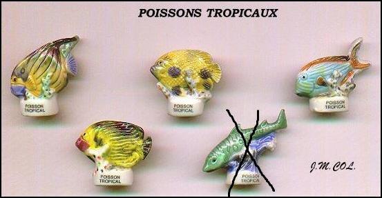 MES RECHERCHES : POISSONS TROPICAUX