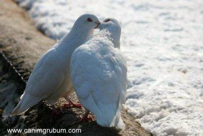 l'amour est.......
