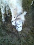 Photo de Horse-98