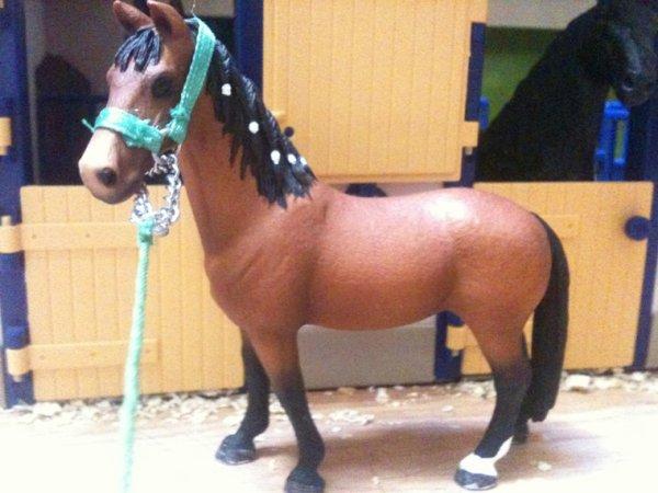 Nos chevaux - Arthémis