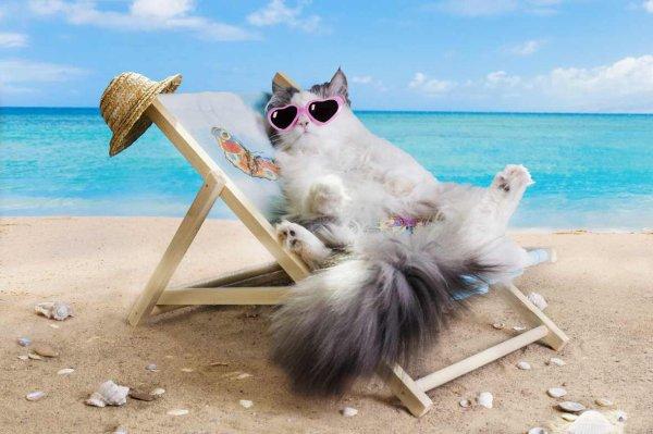 chat vacances