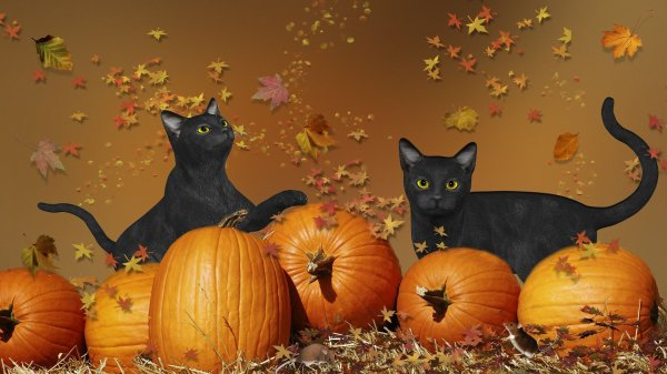 Halloween chat