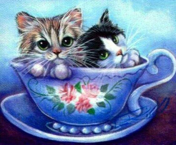 des chats...