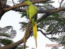 Photo de oiseaux-de-voliere