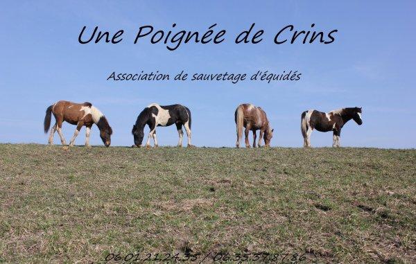 Aidez a sauvée des chevaux/poney innocent