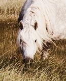Photo de Beautiful-Horses