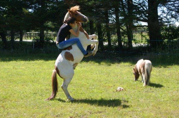 Un cheval ne nous appartient pas. La seule chose que nous possédons, c'est le devoir de nous en occuper correctement.
