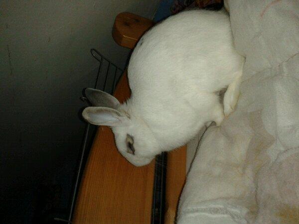 Mon lapin biento 2ans ke je les