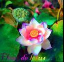 Photo de peace18