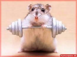 La petite souris cromimi