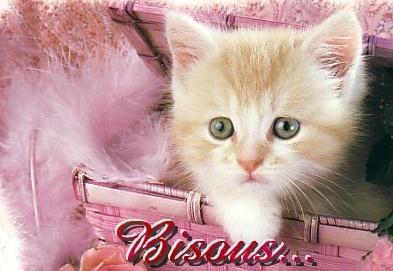 bisous chaton eternel c 39 est mon coeur mais pas ma vie als. Black Bedroom Furniture Sets. Home Design Ideas