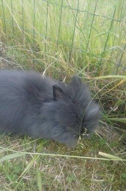 nouvelle fotos de leo des lapinous de liliane adopteé par noa de sambreville