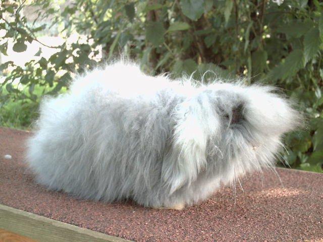 si vous aves adopte un lapinous chet moi vous pouve manvoillet sa foto  je la metre avec plesir sur mon site les lapinous de liliane