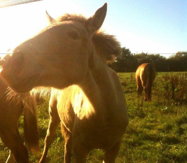 Conférence sur l'alimentation et le bien-etre du cheval
