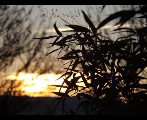 Photographies [ 4 ]
