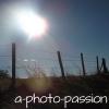 a-photo-passion