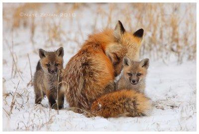 Firefox - Part 1