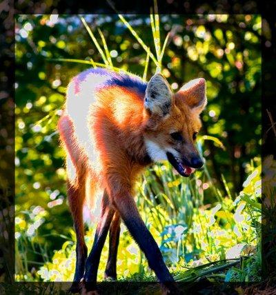 Firefox - Part 10
