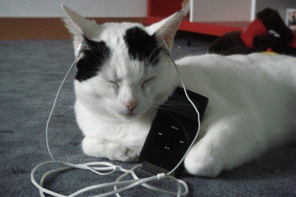 Appeler un chat un chat - Part 8