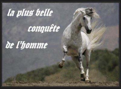 a chevaux