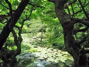 image : nature
