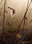divination : arachnomancie