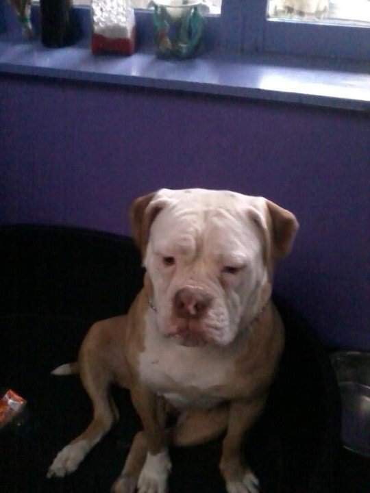 mon chien <3