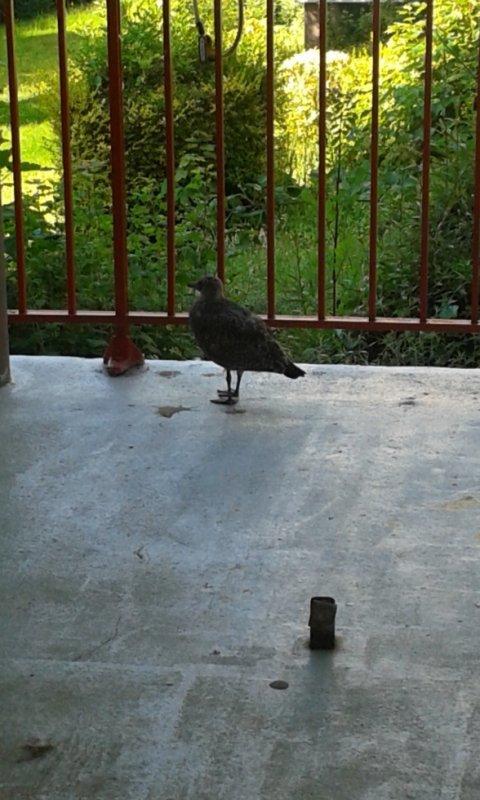 sou notre porche en bas de chez nous