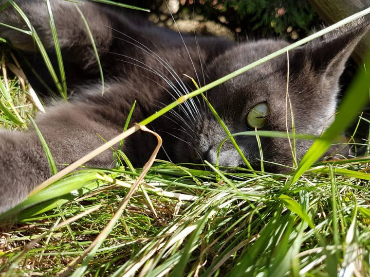 Mon petit Chat !
