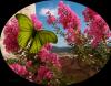 Image papillon et paysage