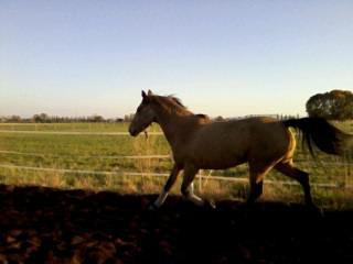 """Monter à cheval transforme le """"je voudrais bien"""" en """"je peux"""".. ♥"""