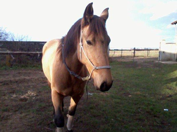 Un cheval sans cavalier reste un cheval, mais un cavalier sans cheval n'est plus qu'un homme..<3