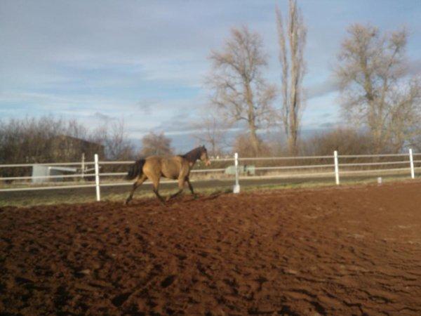 Etre heureux à cheval, c'est être entre ciel et terre, à une hauteur qui n'existe pas. <3