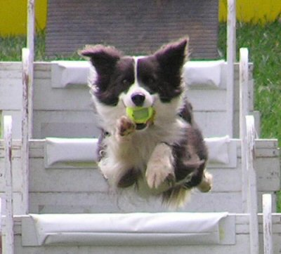 Article 12: Le chien et le sport