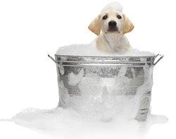 Article 11: Quand il faut laver Médor....