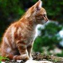 Photo de CatsChronicles