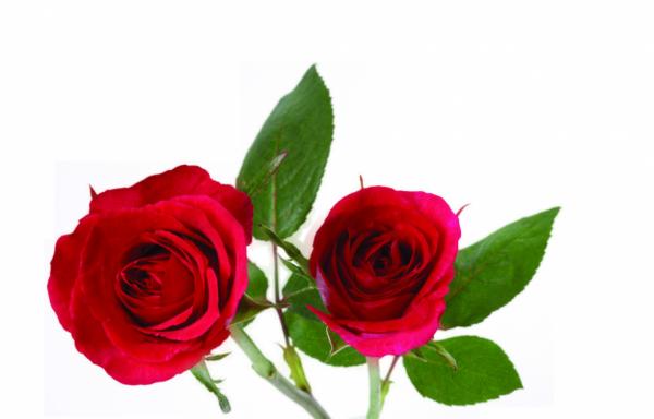 mes tubes fleurs