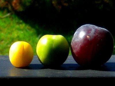 On est tous différent ... même les prunes ! ;)
