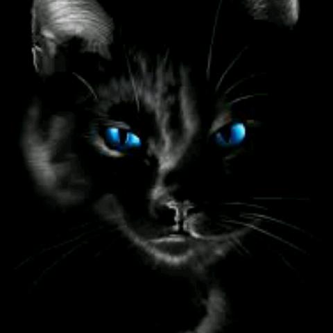 Qui a dit que les chats noirs portaient malheurs?