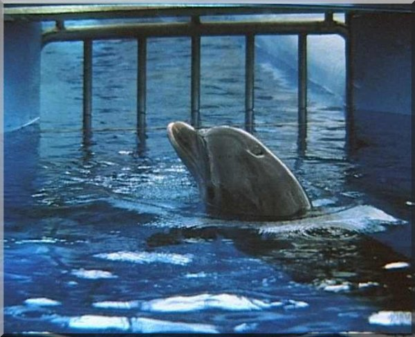 pauvre dauphin