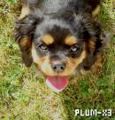Photo de Plum-x3
