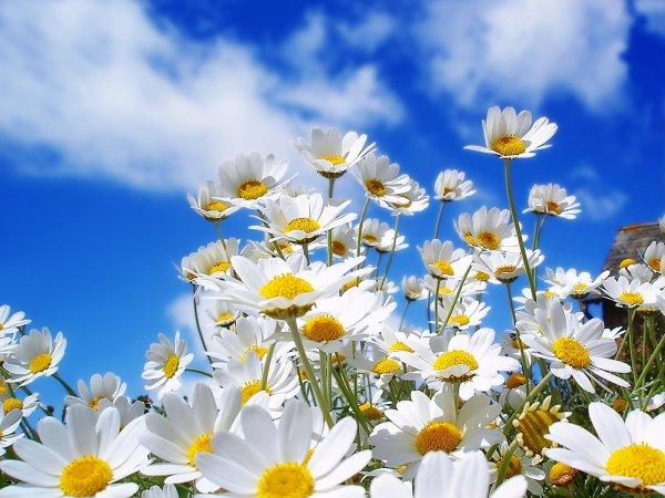 Sous le ciel bleu d'un superbe printemps.